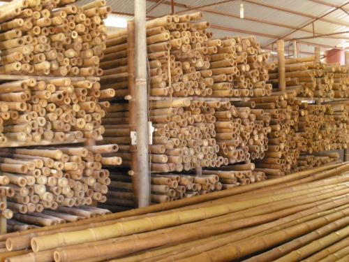 Tiges de bambou bambou vivre for Tiges de bambou deco